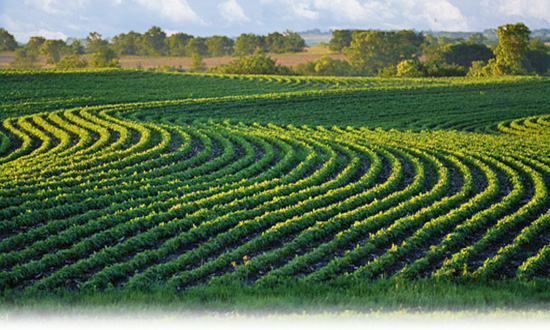 Commodity Specialists Company: The Agricultural Commodity Experts